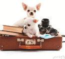 여행 함께 떠나개!