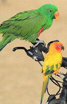 앵무새 가족