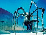 거미로 표현된 모성애