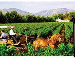 마차를 타고 포도밭을 둘러보는 뷰 마넨 방문객들(왼쪽)과 뷰 원 와인. [사진 제공 · 하이트진로㈜]