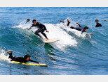 서핑은 역시 하태핫태!