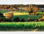 호주 서부 마거릿 리버에 위치한 제너두 와이너리의 포도밭. [사진 제공 · ㈜코스모엘앤비]