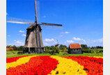 물… 색… 꽃… 봄맞이 들뜬 지구촌