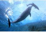 동부산관광단지에 국내 최대 규모 돌고래쇼장 추진…동물보호단체 거센 반발