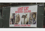 고양이 찾는데 보상금 2천만원..왜