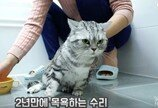"""(영상) 목욕은 정말 싫어 """"나갈래~"""" 하는 고양이"""