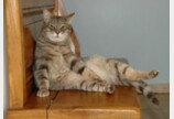 """소파 할퀴는 고양이..""""고칠 수 있어요!"""""""