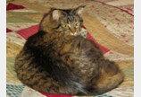 한밤중 주인 깨운 고양이..`가스 중독사 모면`