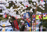 대폭 할인'일본 벚꽃 인기 호텔'은 어디?