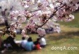 서울 벚꽃 명소 호텔은 어디?…호텔스컴바인 4곳 추천