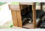성남시, 공원 곳곳에 길고양이급식소 20개소 설치