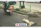 제주 '오토바이 강아지 학대' 사건 미온 대응 경찰관에 '직권경고' 조치