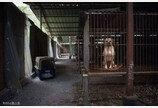 대만, 아시아 최초 개·고양이 식용금지 명문화