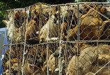 대만, 아시아 최초 개·고양이 식용금지법 통과