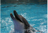 서울대공원, 남방큰돌고래 2마리 제주바다로