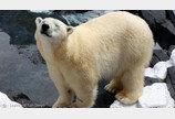 테마파크 북극곰 돌연사 이유는 '외로움'?
