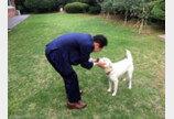 홍준표의 파격 공약 '동물에 제3의 법적지위 부여'