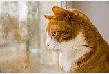 고양이 기분은 날씨 탓!