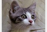 알아두면 쓸데없는 고양이 잡학사전