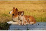 불법 반려동물장묘업체 7개소 적발