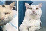 구사일생 길고양이,쌍꺼풀 수술 후 대박 '펑펑'…외모 덕?
