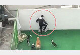 부천 애견유치원 가해자 '혐의없음'…네티즌들 반발