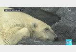 대전 오월드 북극곰 '남극이' 1월 사망 사실 이제야 밝혀져