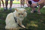목줄 찬 고양이들의 단체산책..'캐터데이'를 아시나요