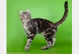 고양이 귀에 관한 `쿨한` 사실들