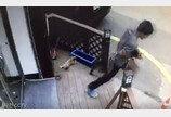 길고양이 내동댕이 살해 남성..600만원 벌금 폭탄