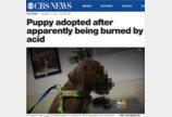'염산 테러' 당한 강아지, 새주인을 만나다!