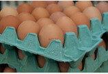 '살충제 계란' 파문..개 외부기생충약 계속 써도 될까