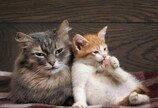"""""""헤어지기 싫어.."""" 애인 고양이 훔친 남성 입건"""