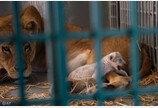 '피난도 못 간다'...전쟁에 방치된 동물들