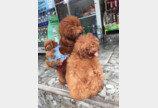 `강아지 백팩 맨 어미개`..한 애견인의 기발한 발상