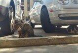 14만평 땅을 소유한 대장고양이 '왕초'