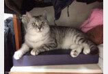 고양이 낯선 집 적응하기, 이사 예행연습