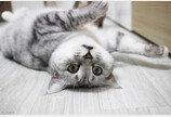 집사를 변태로 만드는 고양이의 마법