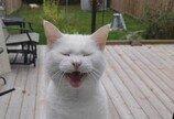 1년째 매일 찾아오는 이웃고양이..`간식 달라옹`