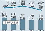 쌀 생산량 37년만에 400만t 무너져… 올해 수확기 쌀값 작년보다 오를듯