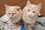 `동사 위기` 새끼고양이 구한 경찰견