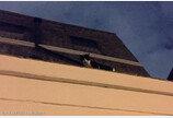 실종 고양이..알고 보니 이웃집 지붕위에
