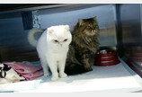 청계천에 고양이 버리고 떠난 외국인 유학생