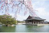 꽃피는 4월, 일본인이 선호하는 꽃놀이 여행지 1위는 '서울'