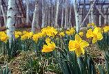 화담숲, 4월 중순까지 '봄 야생화 축제'