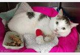 30m 아파트 추락서 생존한 고양이