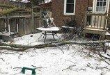 억세게 운좋은 개..폭풍에 부러지는 나무 피해