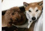 '인질범(?)'이 보내온 강아지의 밥그릇 사진