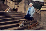 마지막 웰시코기 떠나 보낸 영국 여왕