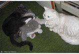집사와 사별한 뒤 인형만 안고 있는 고양이